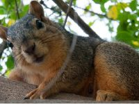 What to watch on TV: Chicago's Segregated Squirrels