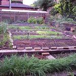 Tour Rick Bayless' Organic Garden