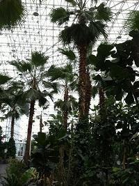 Crystal Garden