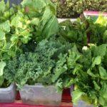 Neighborhood Farmers Markets Sunday