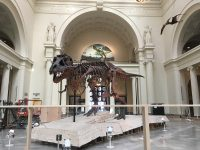 Watch Sue disassembled at Field Museum