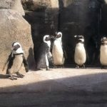 Free Lincoln Park Zoo 150th Anniversary Celebration