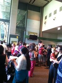 Lincoln Park Zoo Gorilla show