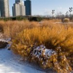 The Lurie Garden: four season splendor