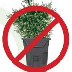 Free City of Chicago Christmas tree recycling