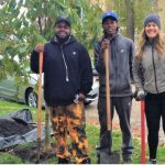 Save money: learn how to care for your trees