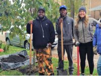 Free Neighborhood Improvement Tree Grant