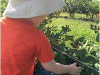 U-Pick Farms around Chicago